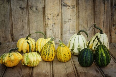 Different kind of Decorative Pumpkin Stock Photo - 10718787