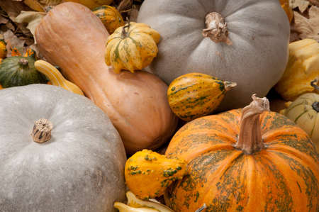 Different kind of pumpkins and winter squashes photo