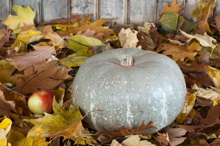 Grey pumpkin on autumn leaves Stock Photo - 12353523