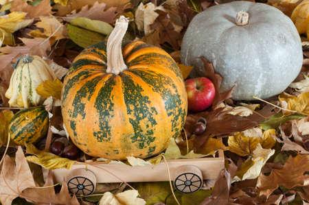 Orange pumpkin on a wooden trolley, grey pumpkin near Stock Photo - 12353522