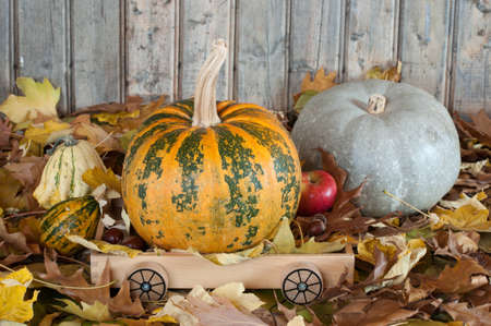Different kind of pumpkins- photography photo