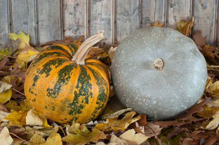 Orange and grey pumpkins-photography Stock Photo - 12673769