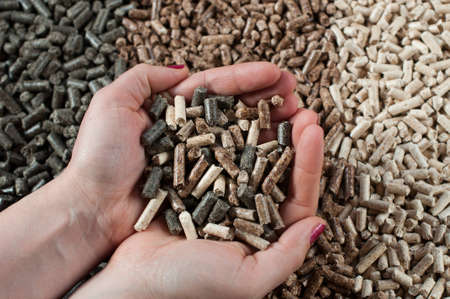 Different kind of pellets in female hands- pine,beech,sunflower photo