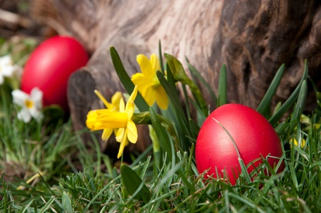 Red egg in the grass, near a log.