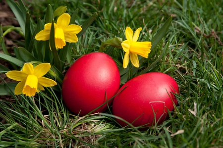 Red eggs in the grass.