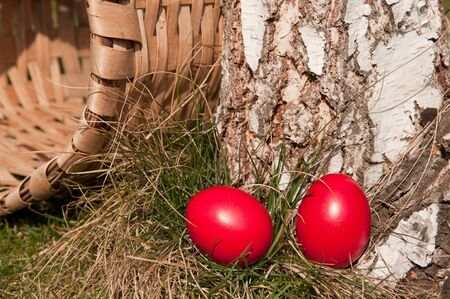 Red egg in the grass, near a log-selective focus on the egg. photo