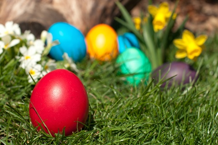 Red egg in a grass photo