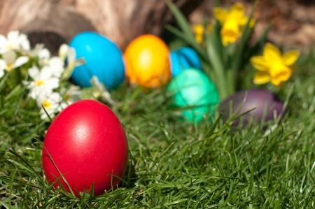 easter egg hunt: Red egg in a grass