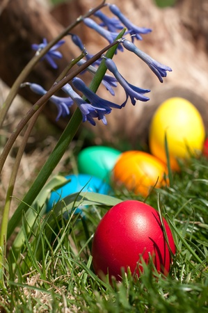 log basket: Red egg in a grass