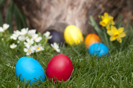 Different color Easter eggs  photo