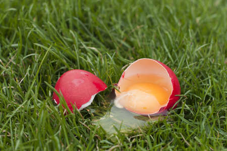 Red egg in a grass-broken and raw photo