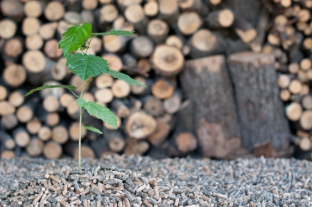 biomasse: Pellets- selective focus on the heap an on the tree Stock Photo