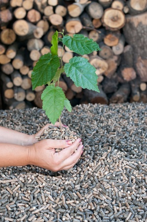 biomasse: Different kind of pellets- oak, pine,sunflower- selective focus on  the hands They hold a young tree