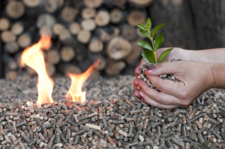 Différents types de granulés dans un foyer flammes sélective sur le tas et les mains Banque d'images