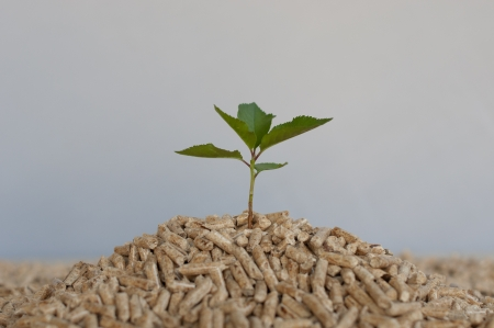 wood pellets: Young tree comes out of heap of pellets