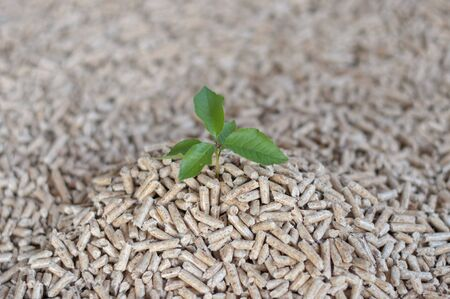 pellet gun: Young tree comes out of heap of pellets