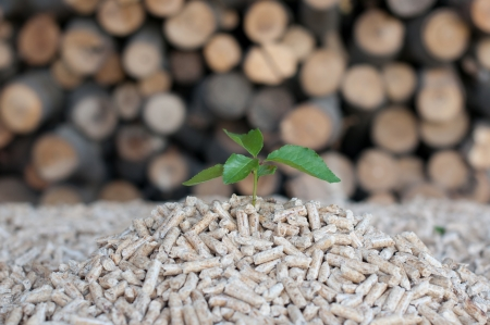 biomasse: Young tree comes out of heap of pellets