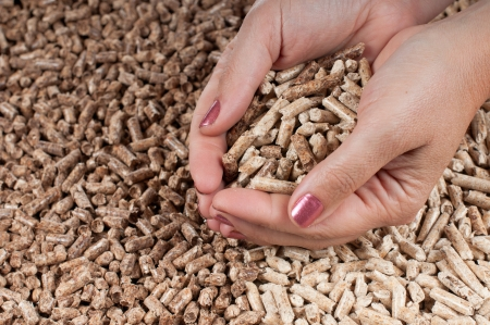 Two kind of pellets in female hands Stock Photo