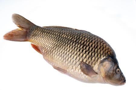 Carp- fish on a white background Stock Photo - 16796445