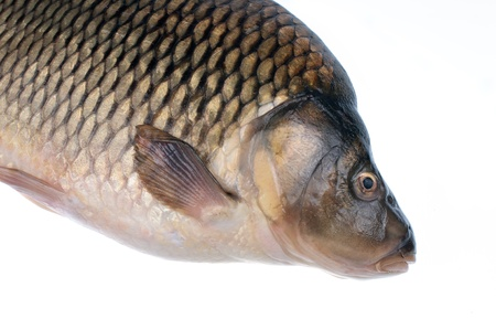 Carp- fish on a white background Stock Photo - 16796446