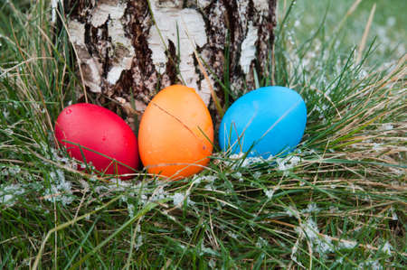 Easter eggs in a nest of grass- there is snow  Stock Photo - 17220913