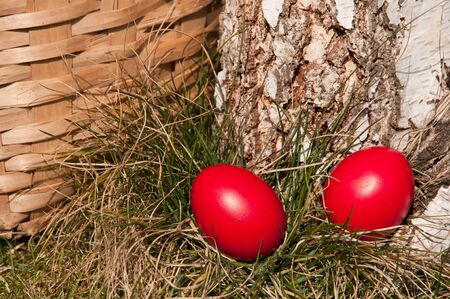 Red Easter eggs in a nest of grass- near basket.