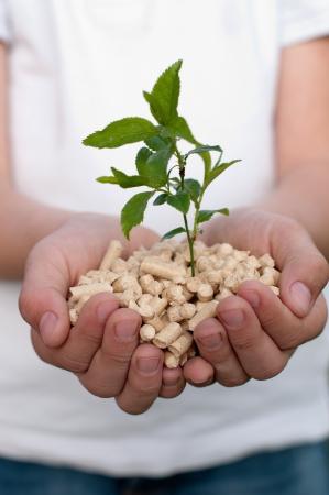 holzbriketts: Pine Pellets in den H�nden des Kindes - selektiven Fokus auf Vordergrund Lizenzfreie Bilder