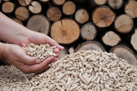 biomasse: Oak pellets in female hands- selective focus on the heap, stock photo Stock Photo