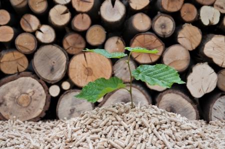 holzbriketts: Junger Baum w�chst aus Haufen von Biomasse Lizenzfreie Bilder