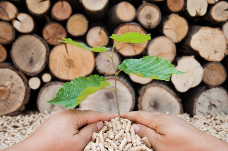 Young tree growing out of heap of biomass in hands- stock photo