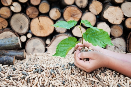 wood pellets: Young tree growing out of heap of biomass in hands- stock photo