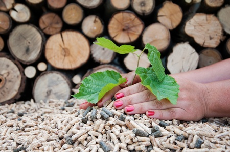 biomasse: Young tree growing out of heap of biomass in hands- stock photo