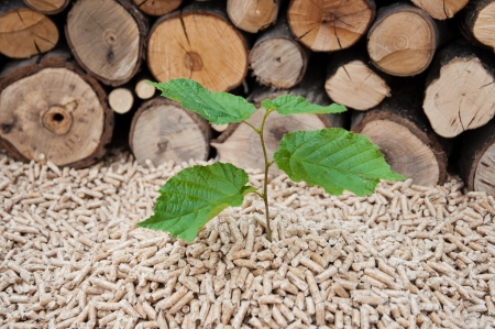 wood pellet: Young tree comes out of heap of pellets