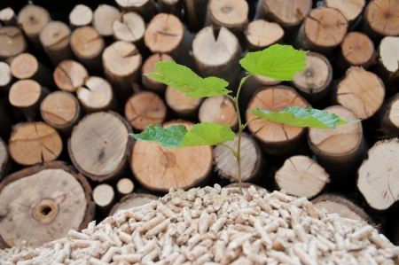 Young tree comes out of heap of pellets