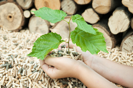 Young tree in female hands over a heap of pelets Stock Photo