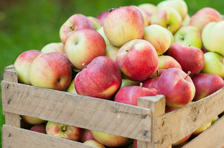 wooden crate: The upper part of the tray full of apples Stock Photo