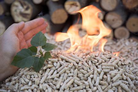 biomasa: Pellets de biomasa en llamas y un pequeño árbol verde Foto de archivo