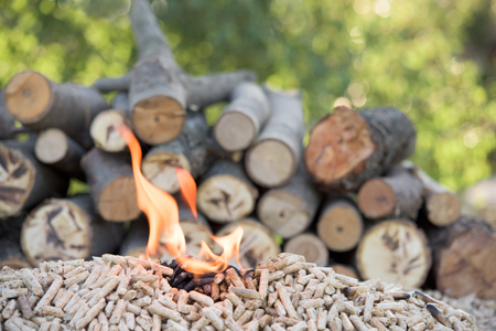 biomasa: Pile of biomass in flames in front wood