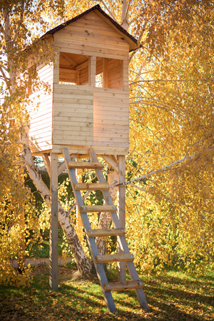 Tree house in autumn birch branches