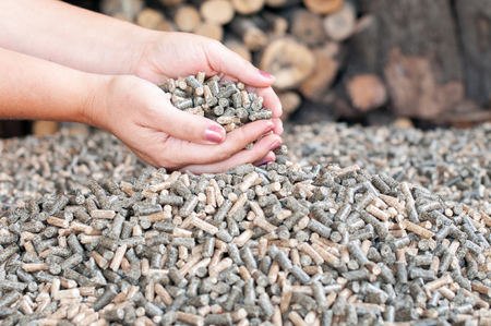 Wooden pellets in female hans - renewable energy