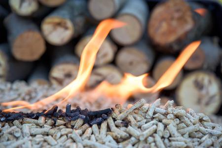 Oak wooden biomass formed in pellets in fire place