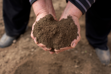 Two dirty old woman hands ful with soil