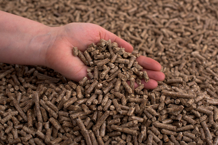 Pine woden biomass formed in pellets in hands Banque d'images