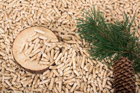 Pine slice, twig and conch on wooden pellets - biomass