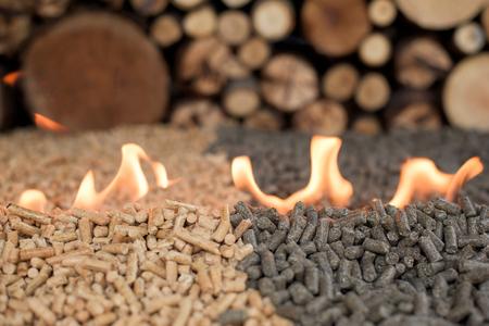 Due tipi di pellet - pino e girasole - nel fuoco