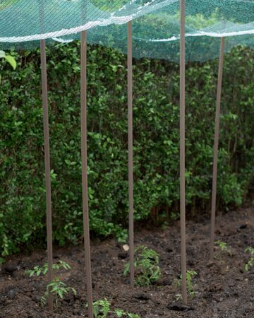 Storm of hail in a vegetable garden and protection net Standard-Bild