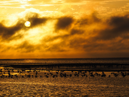 View of orange sunset sky at the ocean with flamingos Stock Photo