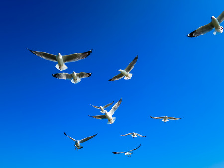 Seagull flocks are flying on the blue sky