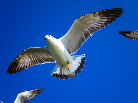 Seagulls are flying on the blue sky in the sunny day