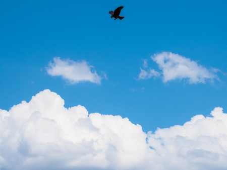 chobe: Tawny eagle bird soaring high silhouette in the blue sky with white cloud